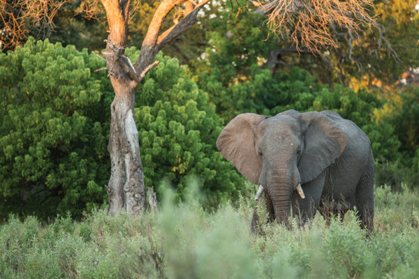 Life With Elephants