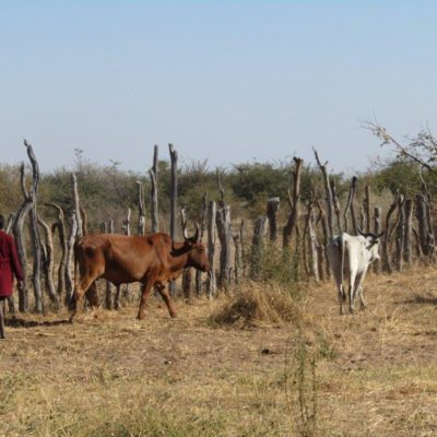 2019-great-plains-foundation-traditional-herding-4